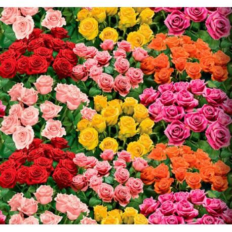 vinyl-rose-11-an50-rozen